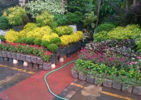 jual tanaman hias di Palembang