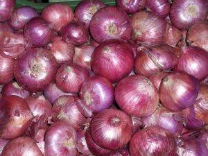 jual bibit bawang merah di Palembang