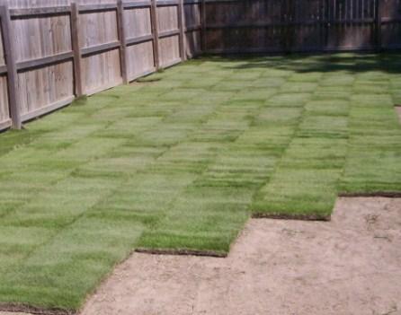 jual rumput taman Kupang
