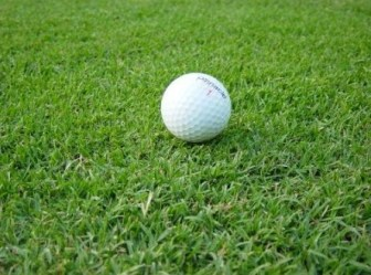 jual rumput taman Bengkulu