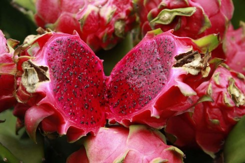 jual tanaman buah Bogor